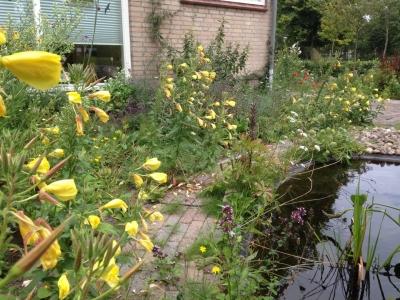 Natuurlijke vogelvriendelijke tuin in Waalwijk
